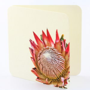 bamboo general card protea